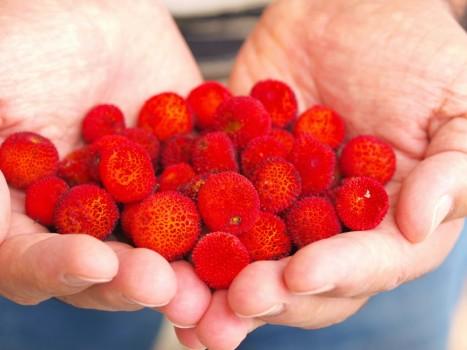 Mação | Quintais do Pinhal dinamizam produtos locais