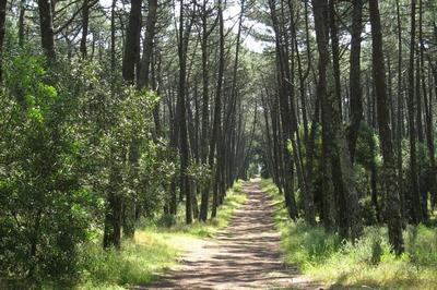 Vila de Rei – Espaço Florestal (por José Antunes)