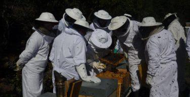 apicultura, mel, sertã, beerural