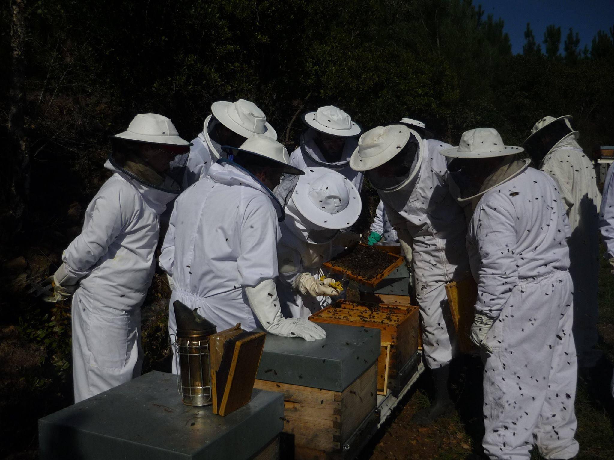 BeeRural®  – SERTÃ ganha nova loja online de produtos para a apicultura.