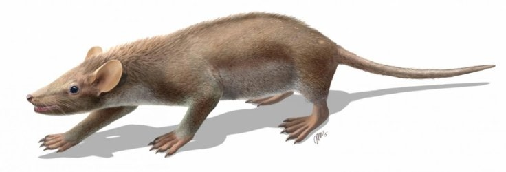 Spinolestes Xenarthrosus